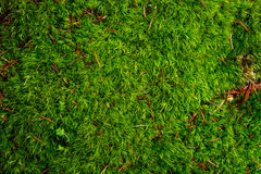 Green moss in the forest Stock Image