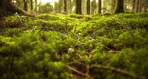 Green moss on forest floor