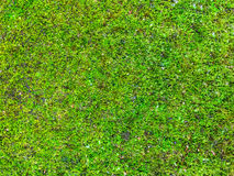 Green Moss Royalty Free Stock Photo