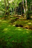 Green moss forest Stock Photo