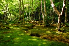 Green moss forest. A lush forest with the ground covered in green moss Stock Photos