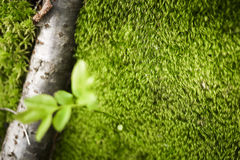Green moss in a forest in Val di Mello, Alps Mountains, Italy Royalty Free Stock Photography