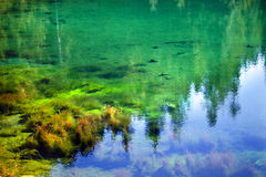 Green Moss Garden Underwater Gold Lake Abstract Stock Image