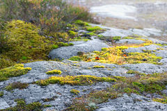 Green moss on granite rocks Royalty Free Stock Images