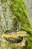 Green moss, gray lichen and yellow mushroom Stock Photos
