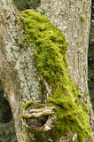 Green moss, gray lichen and yellow mushroom Stock Photo