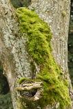 Green moss, gray lichen and yellow mushroom Stock Photo