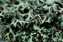 Green moss. Royalty Free Stock Photography