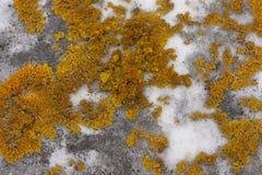 Green moss on grey stone Stock Image