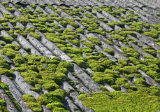 Green moss on grey vintage tiled roof, Stock Photography