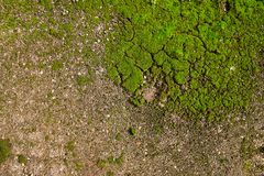 Moss on the ground. Green moss on the ground Stock Image