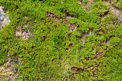 Green moss on the ground Stock Photo