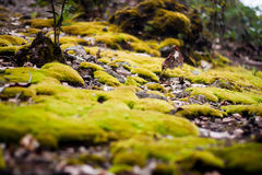 Green moss on the ground Stock Images