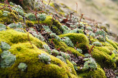 Green moss on the ground Royalty Free Stock Images