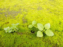 Green moss on ground with plant Royalty Free Stock Photo