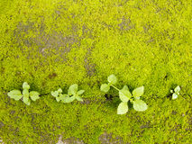 Green moss on ground with plant Stock Photography