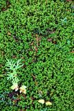Green moss groundcover. Aerial view of green mossy groundcover on the humid forested floor stock photo