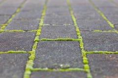 Green moss growing Royalty Free Stock Photos