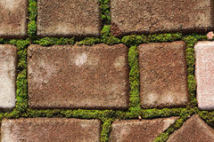 Green moss grows between bricks Royalty Free Stock Photo