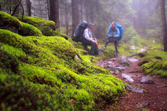 Green moss on hiking trail wild forest,  Royalty Free Stock Photos