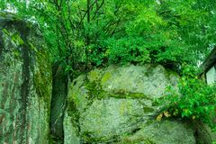 Green moss on huge boulders. stock photography
