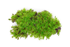 Green moss isolated on white Stock Photo