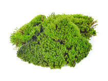 Green moss. Isolated on white bakground Stock Photography