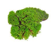 Green moss. Isolated on white bakground Royalty Free Stock Photography