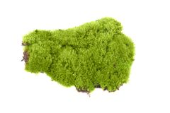Green moss isolated Stock Photos