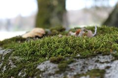 Green Moss on large rock Royalty Free Stock Image