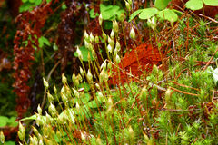 Green moss and leaves close-up in the forest in rainy day. stock image