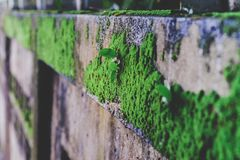 Green Moss or lichen on old wall nature stock images