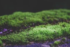 Green Moss or lichen on old wall nature stock photo