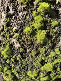 Stone wall in Green moss royalty free stock images