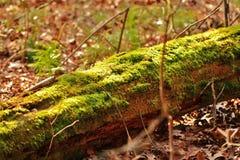 Green moss log Royalty Free Stock Photo
