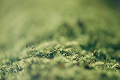 Green moss macro Stock Image