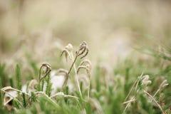 Green moss macro Royalty Free Stock Photo