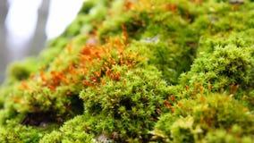Green moss, macro stock video