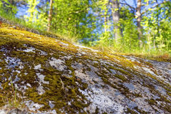 Green moss on the marble rock in forest Royalty Free Stock Photo