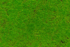 Green Moss, Moss plant cover stone wet Stock Images