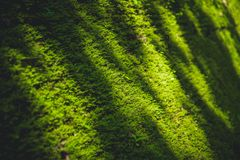 Green moss nature in deep forest cover the old brick stock photo