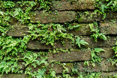 Green moss on old brick wall Royalty Free Stock Photos