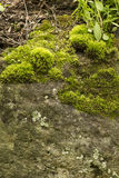 Green moss on the old rock Stock Images