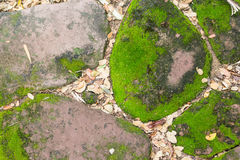 Green moss on old stone.  Royalty Free Stock Photo
