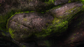 Green moss on old stone Stock Images