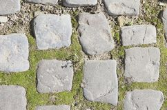 Green moss on old stone footpath Stock Image
