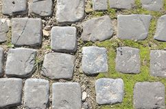 Green moss on old stone footpath Royalty Free Stock Photo