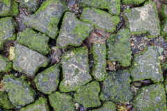 Green moss on old stone wall.. Stock Image