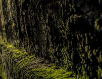 Green moss texture on old stone wall, background stock photo