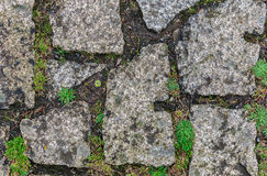 Green moss on old stone wall Stock Photo